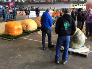 Dale Marshal and his Alaska State Fair 2nd Place Pumpkin sponsored by Southside Garden Supply of Anchorage and Wasilla, Alaska